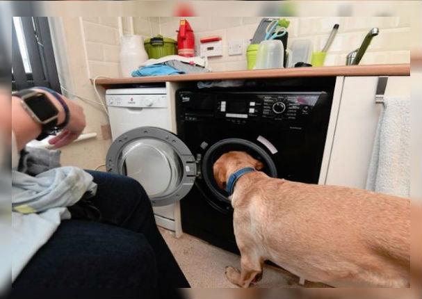 Perrito aprendió tareas domésticas para ayudar a su dueña en silla de ruedas