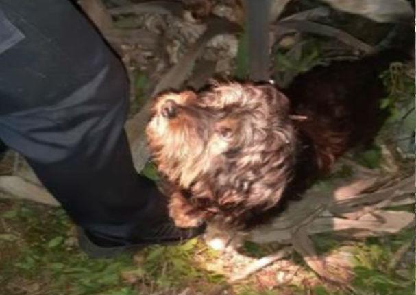 Perrito ladró más de 8 horas para avisar que su dueño se había caído a un barranco