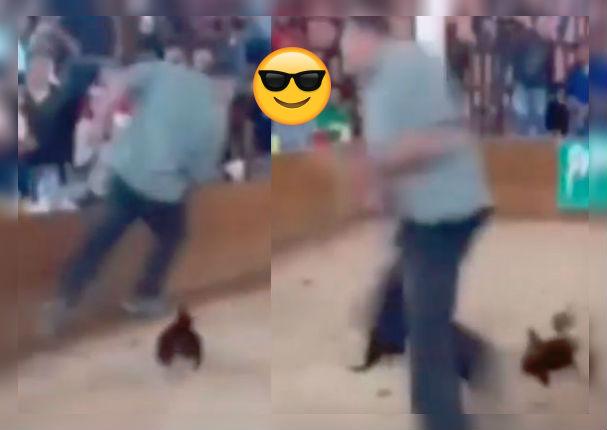 Gallo decide 'vengarse' de su dueño por llevarlo a pelear a un ring