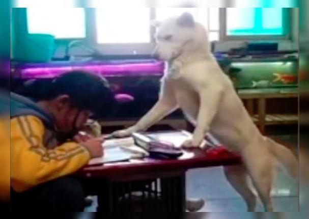 Perro no permite que niña revise su 'Facebook' mientras hace su tarea