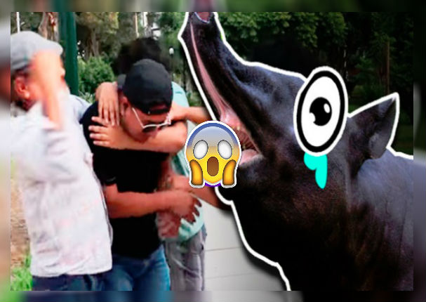 tapir-590-recibe-tremenda-golpiza-mientras-graba-video-de-reflexion-video