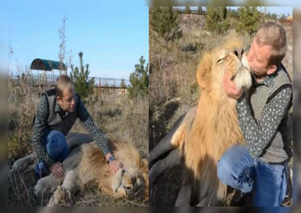 León finge su muerte para llamar la atención de su cuidador