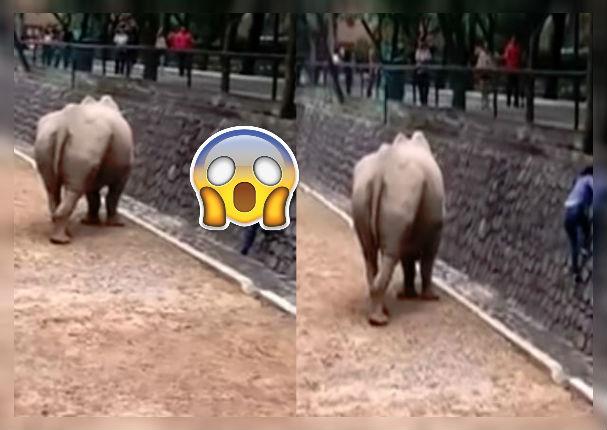 Mujer se 'enfrenta' a rinoceronte para salvar su iPhone