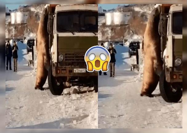 León marino hace dormir a conductores para 'robar' toneladas de pescados (VIDEO)