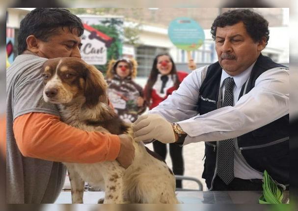 VanCan 2019: Vacunarán gratis a más de un millón de perros