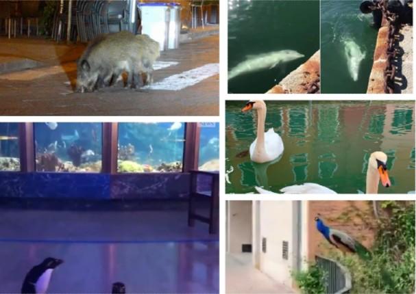 El coronavirus devuelve a los animales su espacio en el mundo
