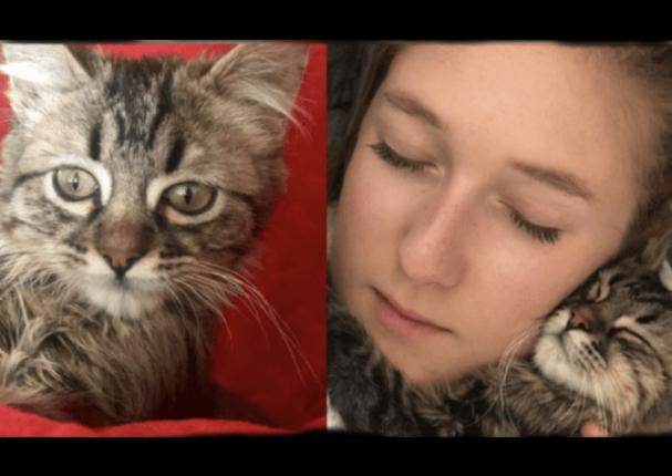 En Bélgica, gato peruano se salva de recibir eutanasia gracias al apoyo del Senasa