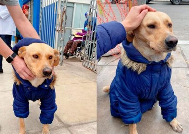Perrito espera afuera del hospital Almenara a que su dueño se recupera de Covid-19