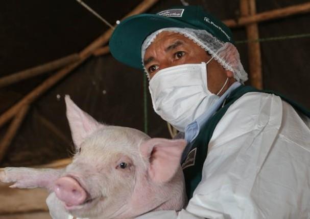 Senasa busca que el Perú tenga zonas libre de peste porcina