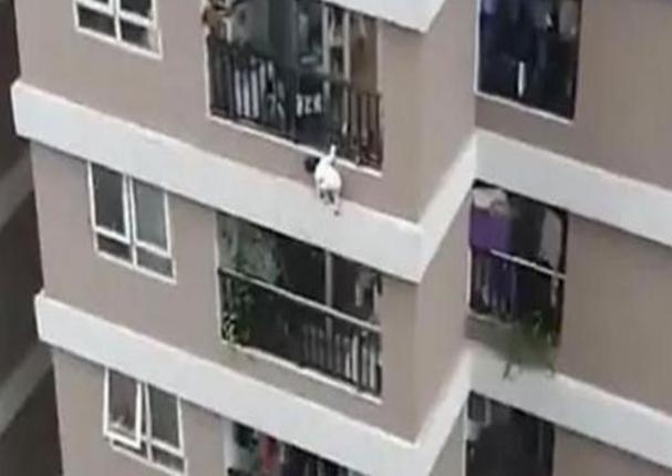 Repartidor salva la vida a una niña que cayó del piso 12 de un edificio en Vietnam | VIDEO