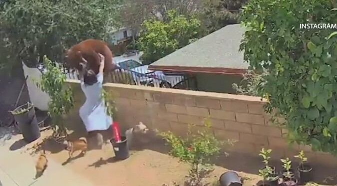 Joven de 17 años defiende a sus perros de ataque de oso