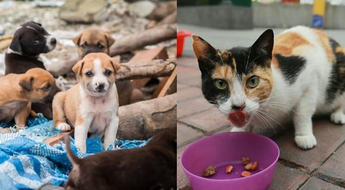 Ley Cuatro Patas: Perros y gatos serán esterilizados por el Estado
